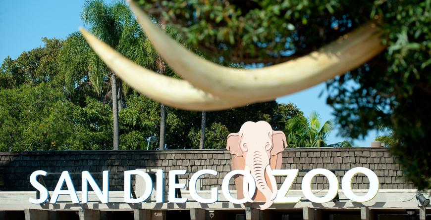 San Diego Zoo, Credit Andreas Hub