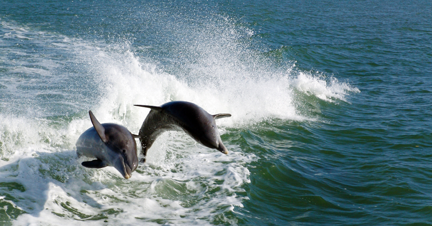 Dolphins, Florida