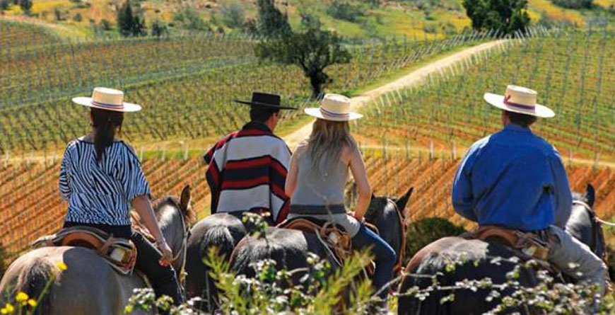 Horse-riding in the Vineyards of Chile, Courtesy Chile Tourist Board
