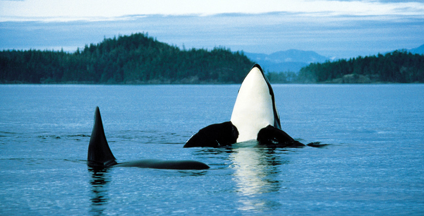 Orca, Vancouver Island, Courtesy of Destination BC