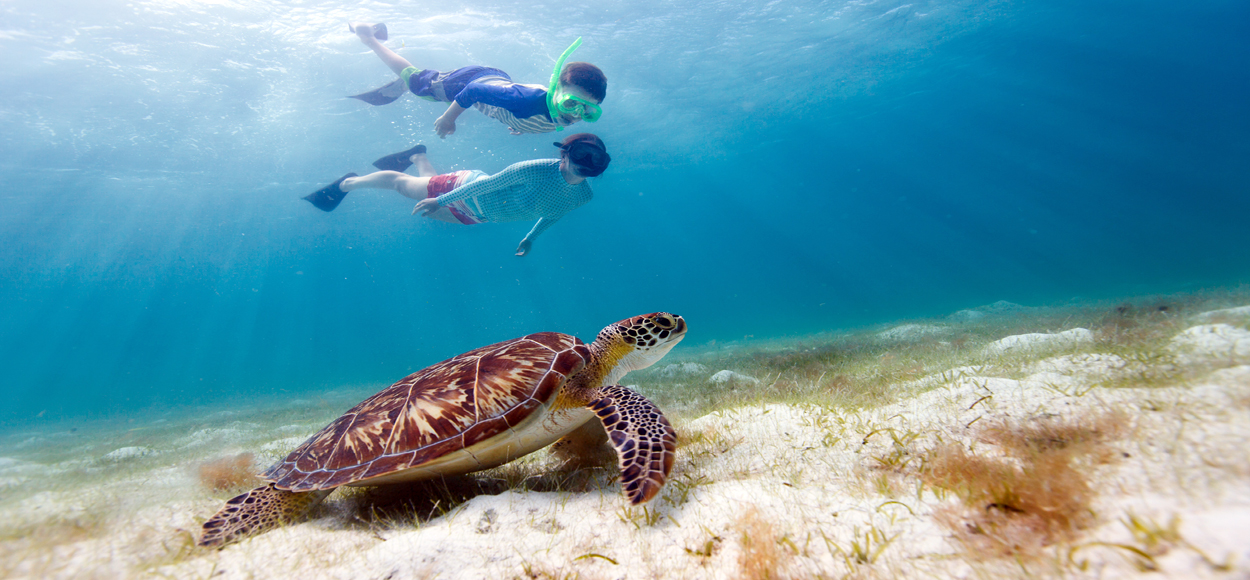 Children Snorkeling with Haksbill Turtle, Credit BlueOrangeStudio, Shutterstock