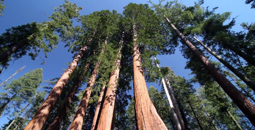 Yosemite, Shutterstock