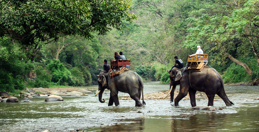 Elephant Trekking through Jungle, Thailand, Credit Shutterstock
